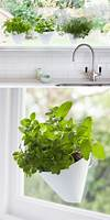 Indoor Garden Idea - Hang Your Plants From The Ceiling indoor hanging garden ideas