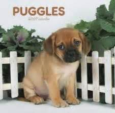Does Puggle Shed A Lot by 1000 Images About Hypoallergenic Dogs On