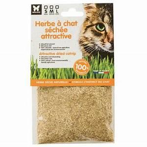 Graine Herbe A Chat : boutique du chat nouveaut s pour chat herbe chat naturelle s ch e attractive albert le chien ~ Melissatoandfro.com Idées de Décoration