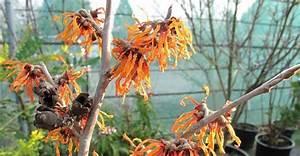 Mimosa Résistant Au Froid : les 718 meilleures images du tableau espace ext rieur jardin par c t maison sur pinterest ~ Melissatoandfro.com Idées de Décoration