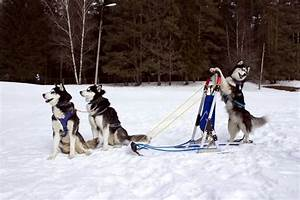 20+ Most Funny ... Dog Sledding Quotes