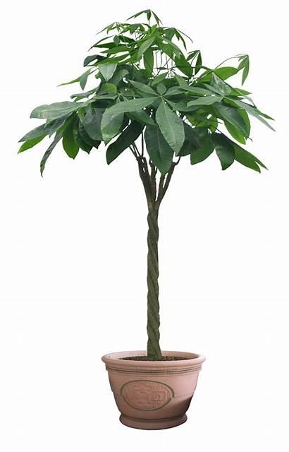 Plants Transparent Pot Cut Trees Houseplants Background