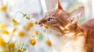 Schneckenkorn Giftig Für Hunde : welche zimmerpflanzen sind f r hunde und katzen giftig ~ Lizthompson.info Haus und Dekorationen