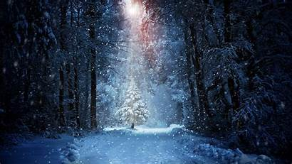 Forest Snow Winter Nature Wallpapers Landscape Snowing