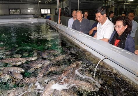 fish grouper indoor farming farm water production aquaculture pollution sustainable method temperature sea groupers agriculture stable fisheries development unaffected raised