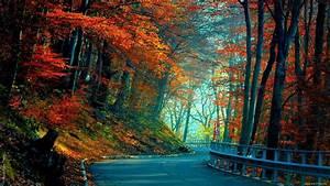 Full HD Wallpaper road autumn forest foliage, Desktop ...