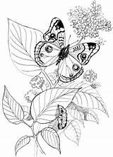 Coloring Butterfly Schmetterling Raupe Patterns Yarn Schmetterlinge Printable Gratis Pyrography Malvorlage Tsgos Tiere Colouring Ausmalbilder Kleurplaten Malvorlagen Adult Draw Spring sketch template