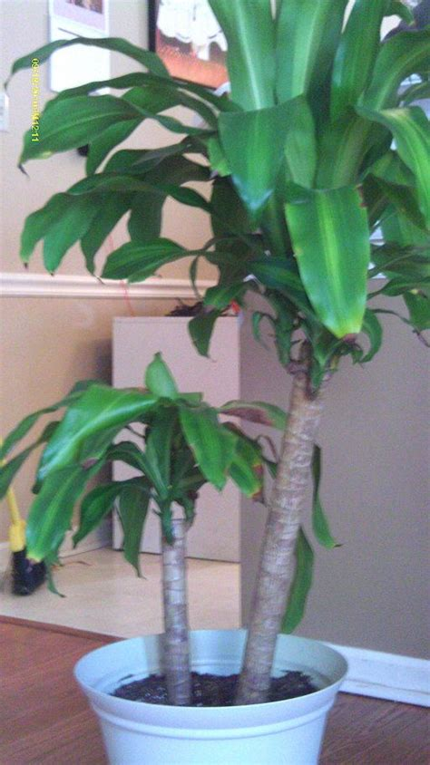 low light indoor plants safe for cats 21 best images about cat safe house plants on pinterest