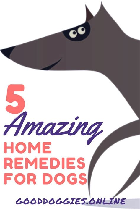 Home Remedies For Shedding Dogs by 1000 Ideas About Shedding Remedies On