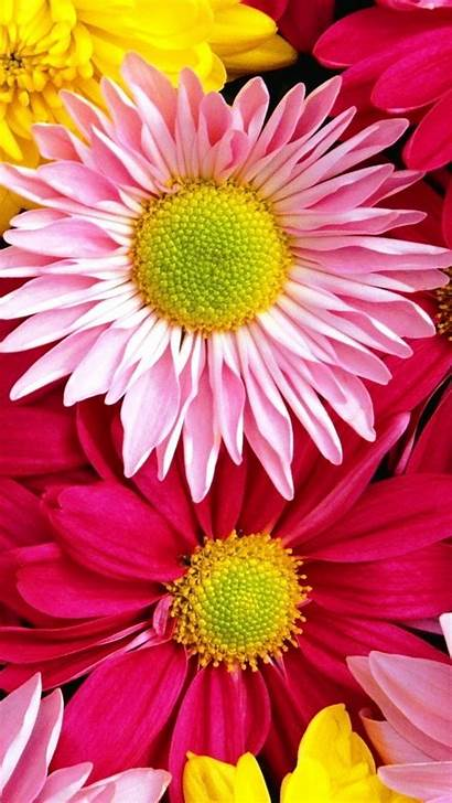 Iphone Flowers Colorful Nature Background Happy Flower