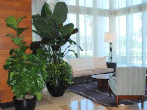 south florida indoor landscape design services plant care