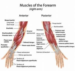 More Insight Into Developing Grip Strength  Your Hand