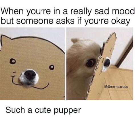 Sad Ok Meme - when you re in a really sad mood but someone asks if you re okay ig meme cloud such a cute