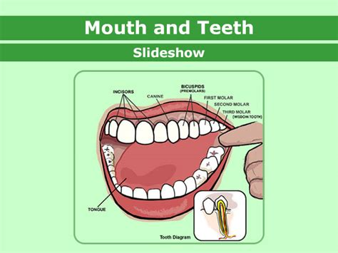 putting objects  mouth clipart   cliparts