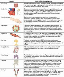 20 5 Circulatory Pathways  U2013 Anatomy And Physiology