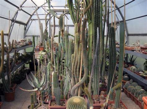 Cactus Da Interno by Terriccio Professionale Per Piante Grasse Da Interno