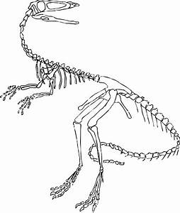i39m working on a project revisited wip tuesday the With printable dinosaur skeleton template