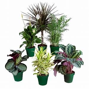Plante Tropicale D Intérieur : costa nursery plantes tropicales premium apg6 rona ~ Melissatoandfro.com Idées de Décoration