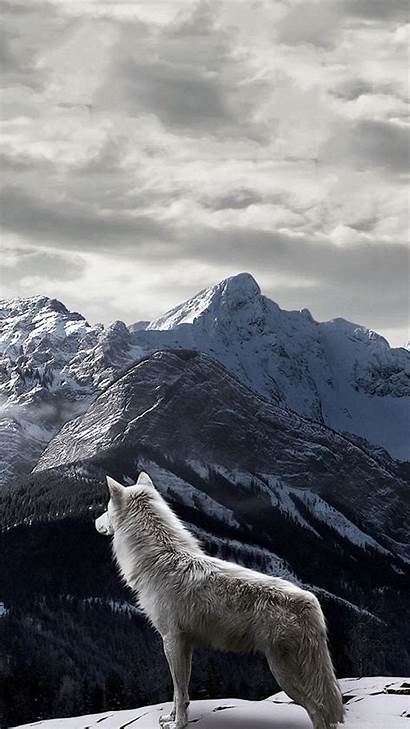 Wolf Iphone Background Wallpapers Mountain Winter Lone