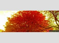 Free! Bright & Breezy Autumn Themed Facebook Timeline