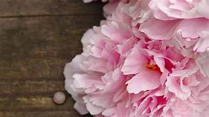 Inspirational Desktop Background Peonies – Kezanari.com