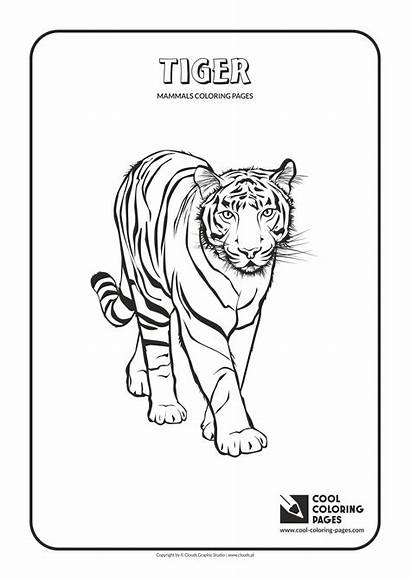Coloring Pages Cool Tiger Mammals Animal Animals