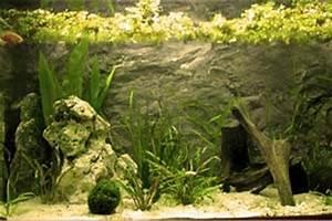 Aquarium Gestaltung Bilder : rochen aquarium gestaltung und dekoration ~ Lizthompson.info Haus und Dekorationen