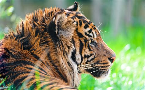 Live Animal Wallpaper For Mobile - hd wallpapers animals gallery