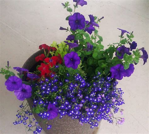 best potted flowers how to plant outdoor potted flowers nuggets of gold