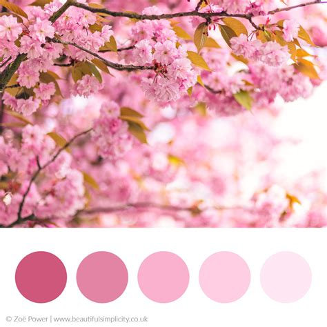 cherry blossom color colour palette inspiration beautiful simplicity