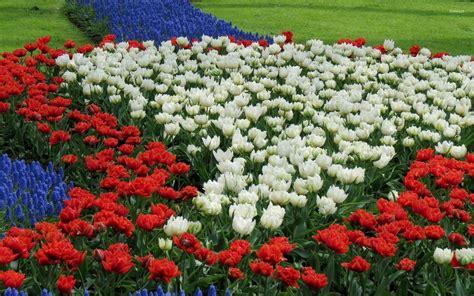 eleletsitz tulip garden images tulip flower garden wallpaper flower inspiration