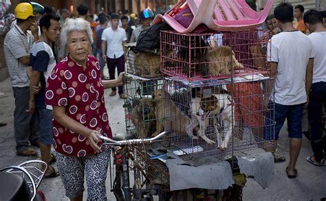 china retira cachorro de lista de animais criados