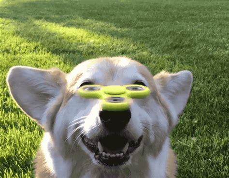 lustige gifs von tieren die dich bestimmt zum lachen