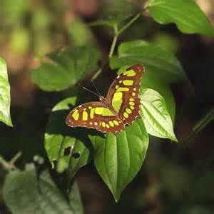 How to Build a Butterfly Habitat