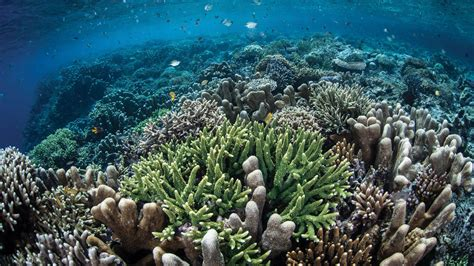 Contact Us | Reef Ecologic