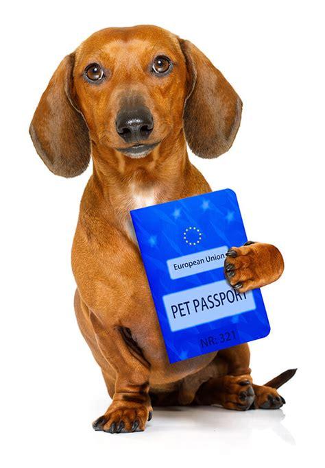 pet passport travel advice  happy pets