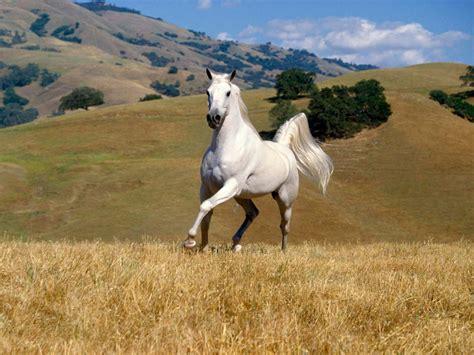 Top 10 Horse Wallpaper, Horse Wallpaper