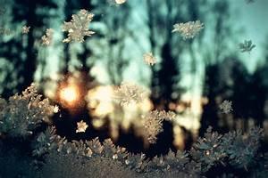 The Treasure Chest: Pretty Photos: Winter Wonderland