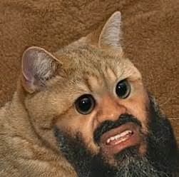 cat beard 19 best images about cat beards and moustaches on