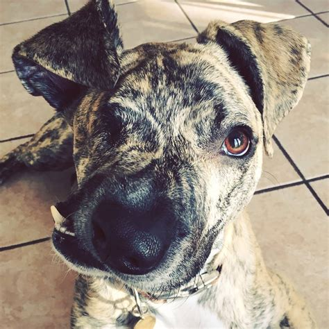 sa rescue dog inspires   eye   semicolon face