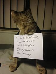 Cats and Dogs Shaming Signs