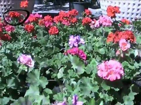 come irrigare un giardino come avere un giardino perfetto