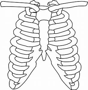 Lungs Free Vector Download  39 Free Vector  For Commercial