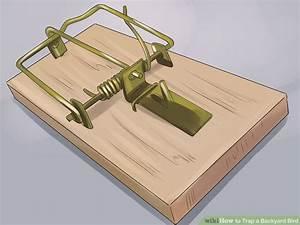 How To Trap A Backyard Bird