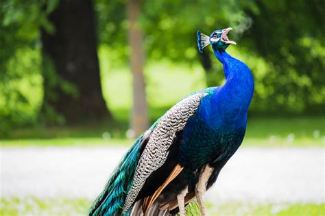 750 Beautiful Animal Pictures Download Free Images On
