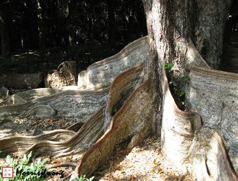 東 高根 森林 公園