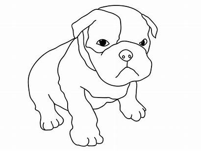 Coloring Pitbull Puppy Dog Pages Boxer Pug
