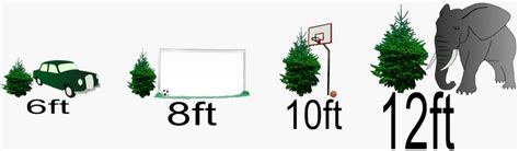 christmas tree size guide green tree delivery real