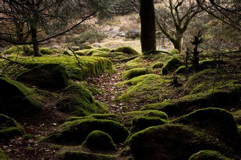 mossy rocks  woods cornwall guide