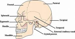 HSTE Project - 2014 The Skeletal System-